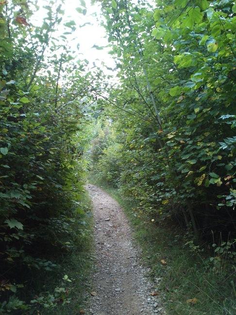 Almost there: Der Trail zum Gempen auf den letzten Metern