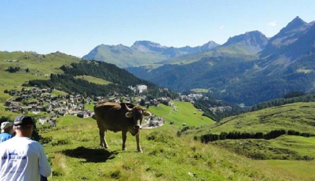 Tolle Aussicht mit Kuh